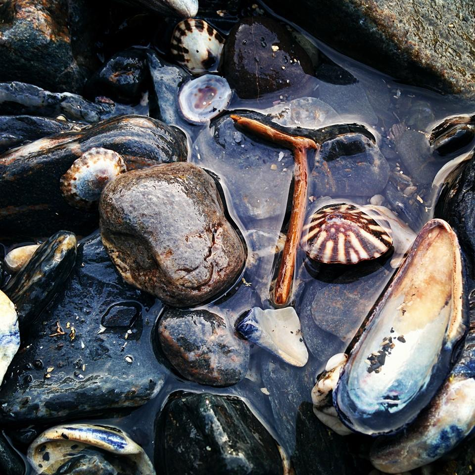 Shells and such, collected in a tidepool on Vancouver Island.