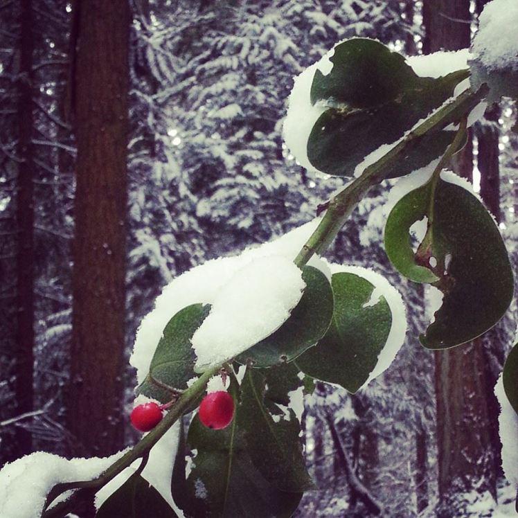 snowy tcsp