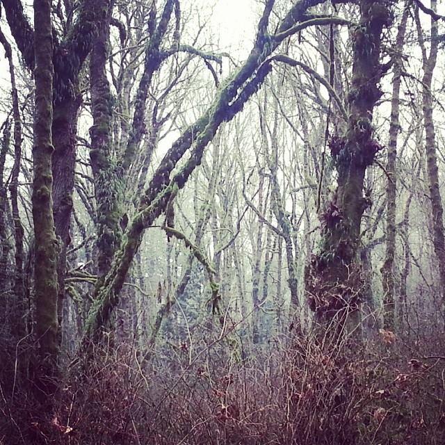 wild winter woods