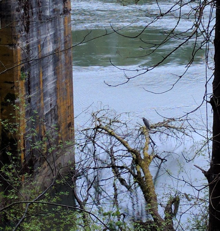 Old iron works and a great blue heron perched above the Willamette.