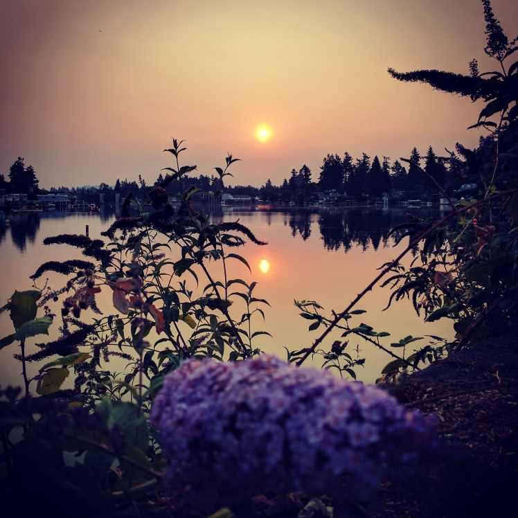 Sun rising though smoke in an orange sky over Oswego Lake. Purple butterfly bush in bloom contrasts in the foreground.