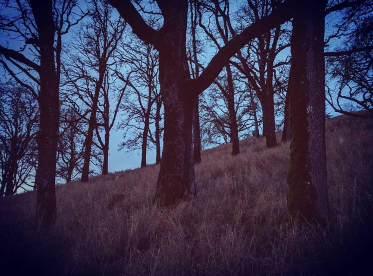 Oak Silence