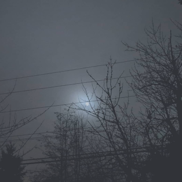 Full moon in January, piercing the fog to shine between winter-black branches.
