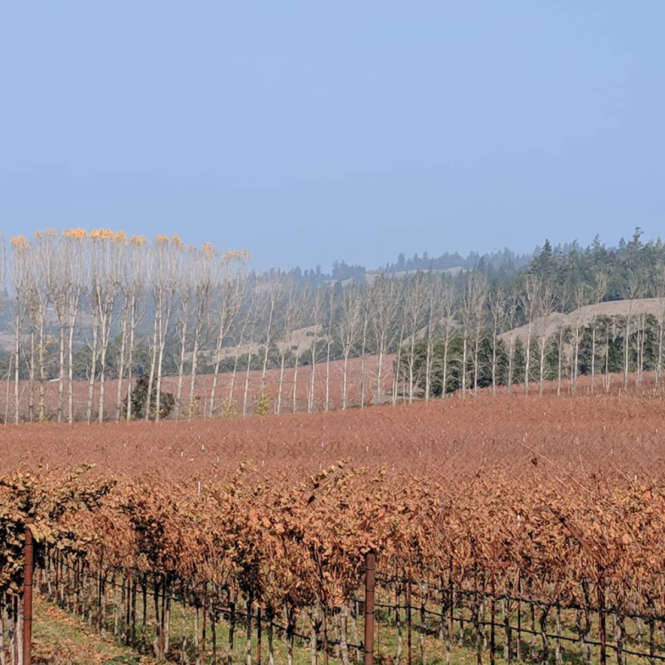 smoky vineyards at the end of a long, scorched summer