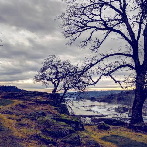 Mossy Oregon City cliffs near Willamette Falls, late winter.