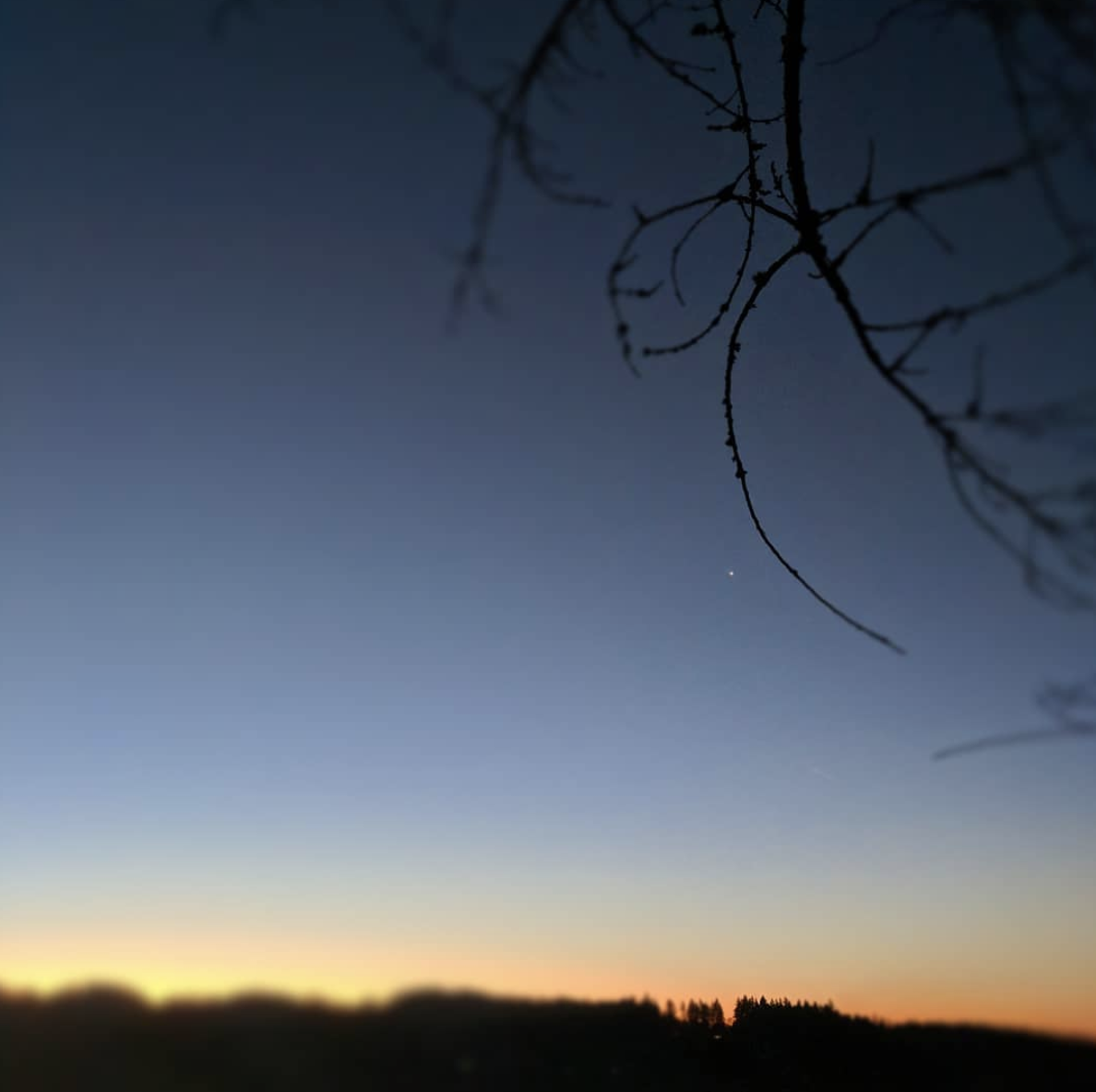 Venus and winter branches, clear sky and the almost-fire of sunrise.