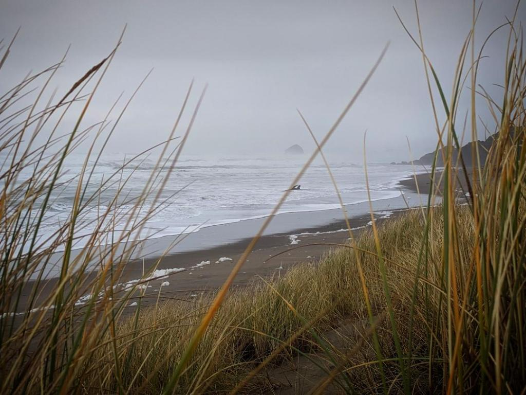 Oregon Coast near Cape Kiwanda, photographed on a grey and rainy day. Gold-green sedges in the foreground, with midground seafoam scattered on brown sand, and white waves breaking.