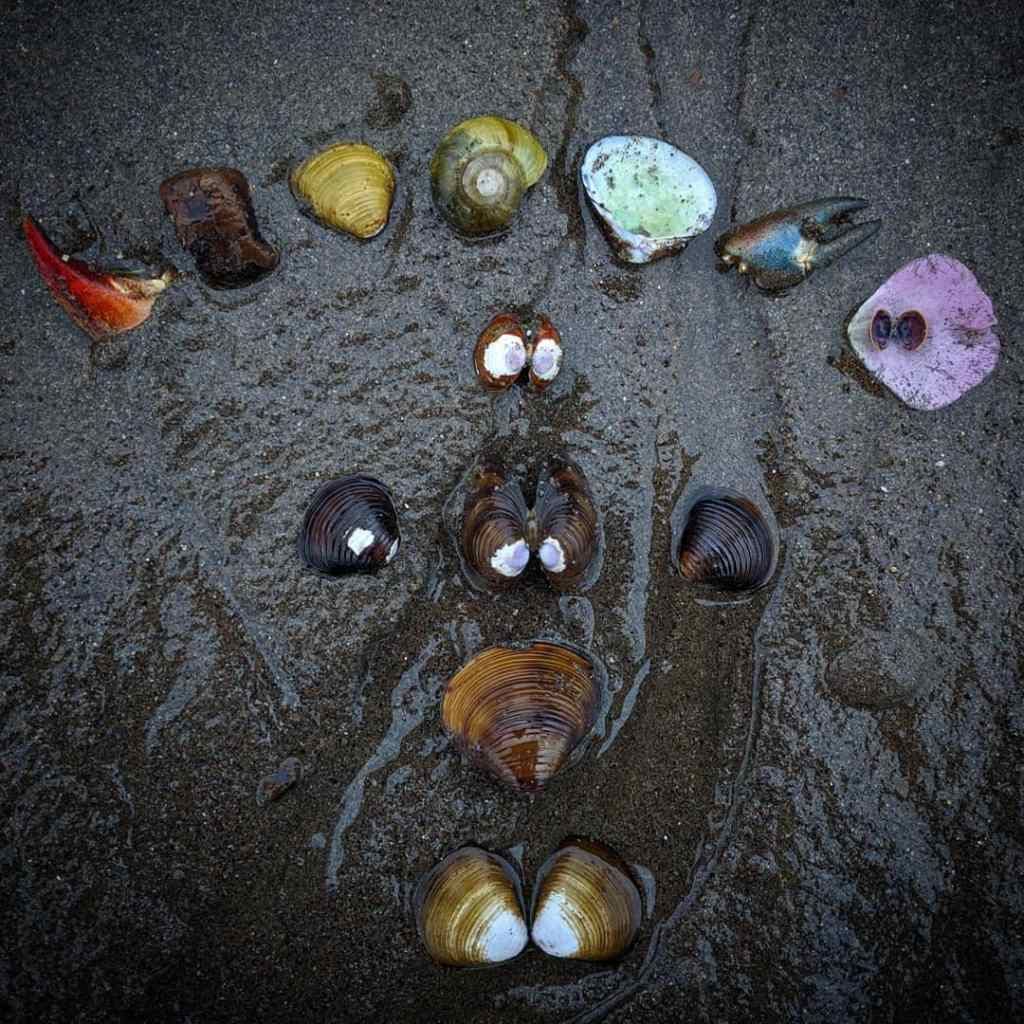 Shells, petals, claws, and stones arranged in a rainbow-based pattern on a grey-sand beach.